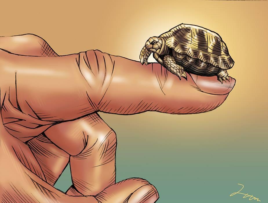指先にリクガメ