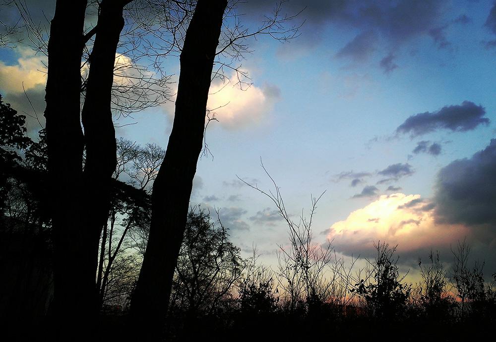 三本松の黄昏