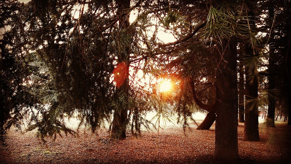 木々の間から落ちる夕日