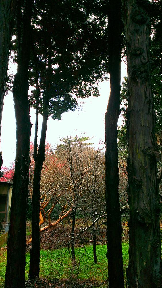 雨上がり湿気を帯びた林