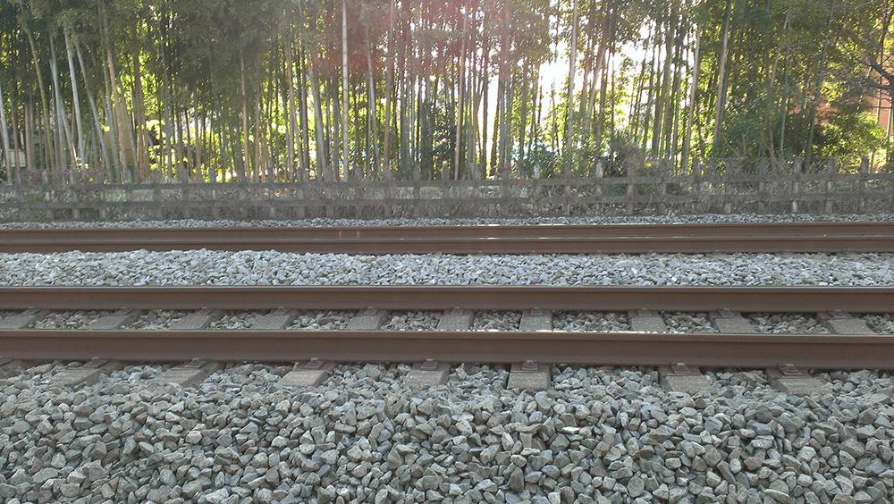 線路の向こうの竹やぶ