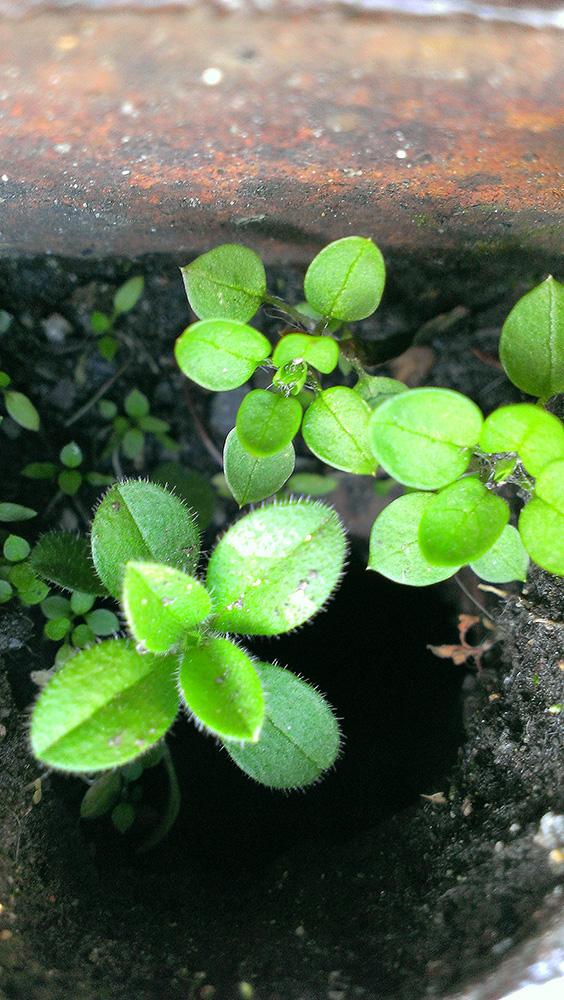 鍵穴の中にも植物の息吹
