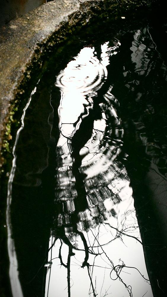 金魚鉢の水面に雨‥波紋