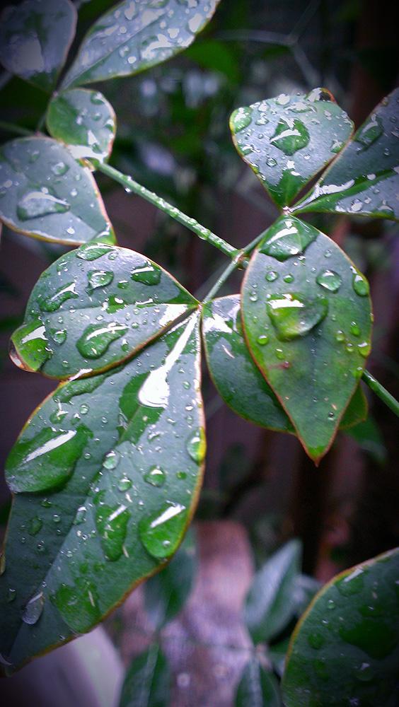 雨雫がきれい