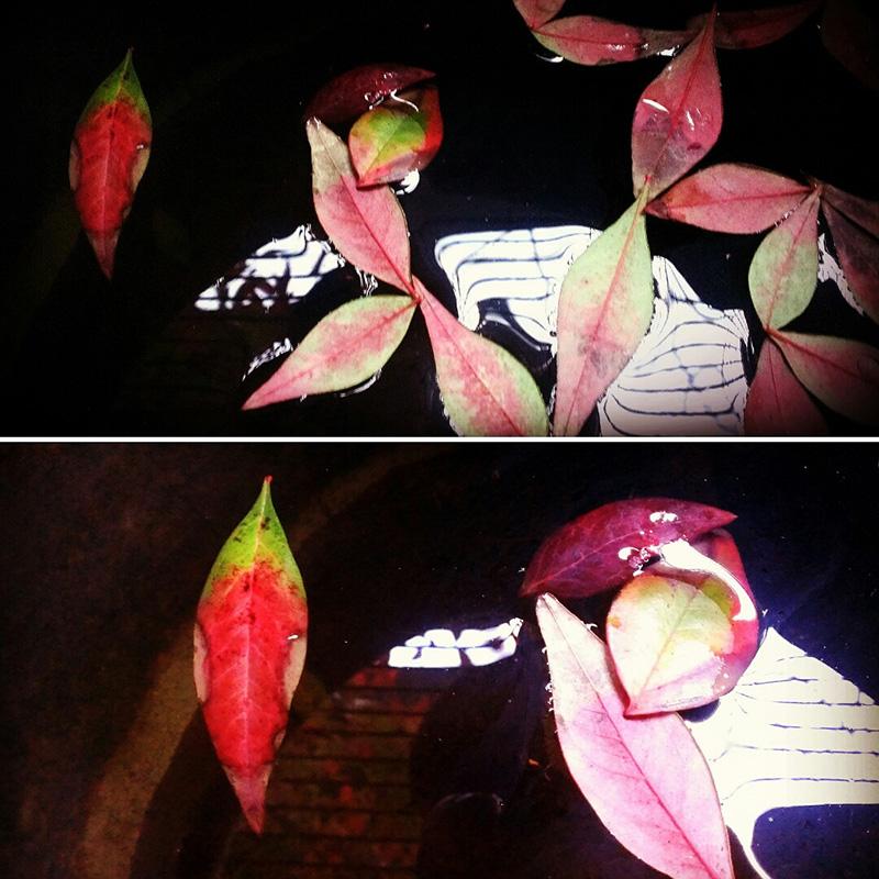 鉢の水面に浮かぶ南天の葉