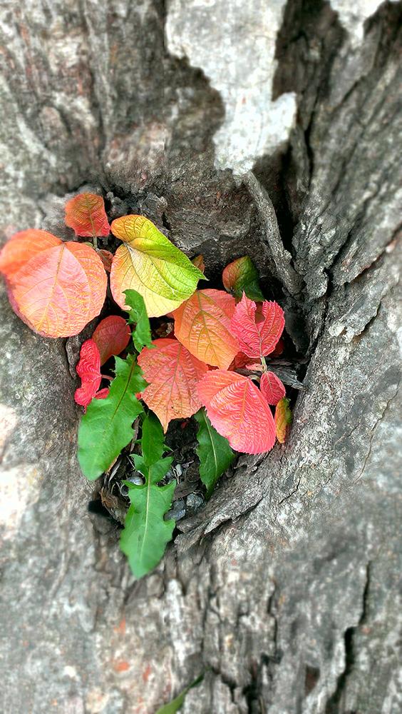 灰色の木の穴からカラフルな葉っぱたち