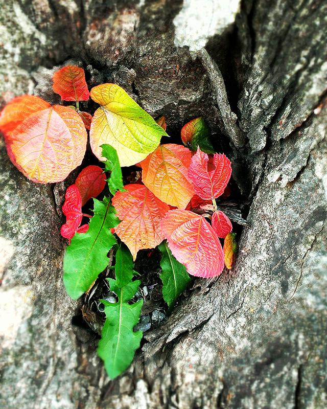 木の穴から葉っぱ(I.V)