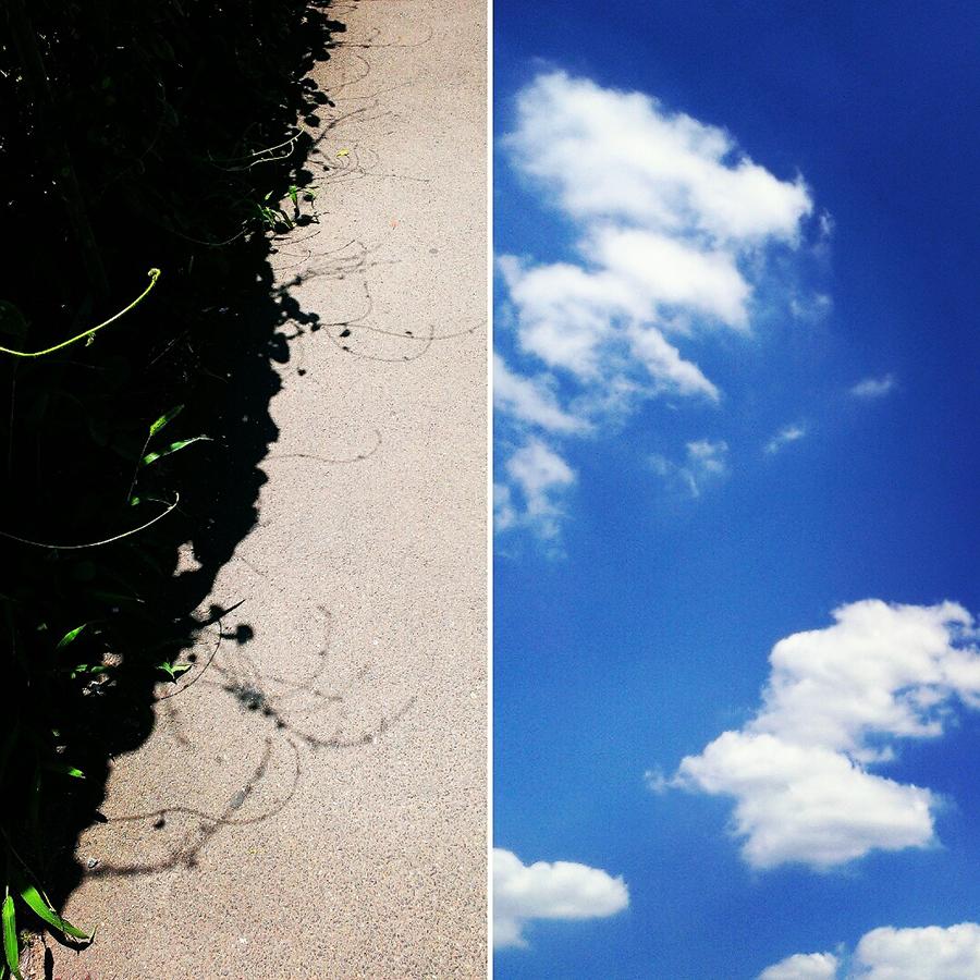 夏の日差しi