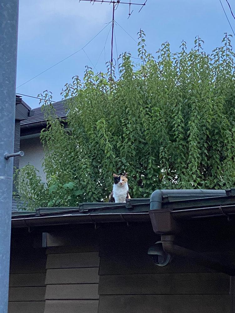 のあ屋根の上:01