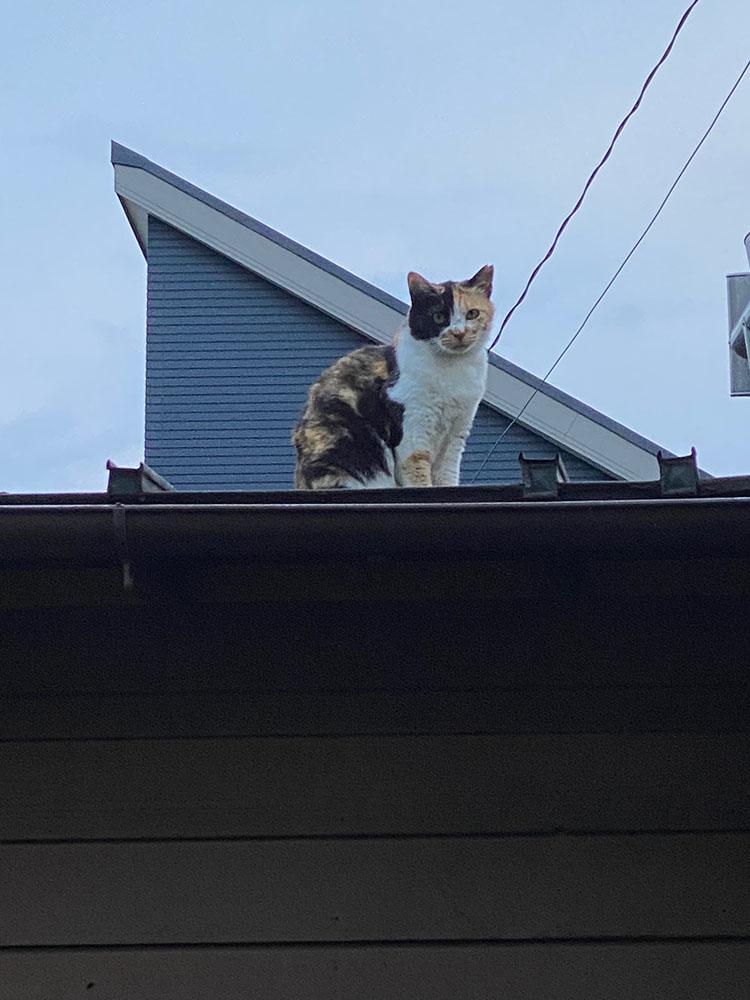 のあ屋根の上:02