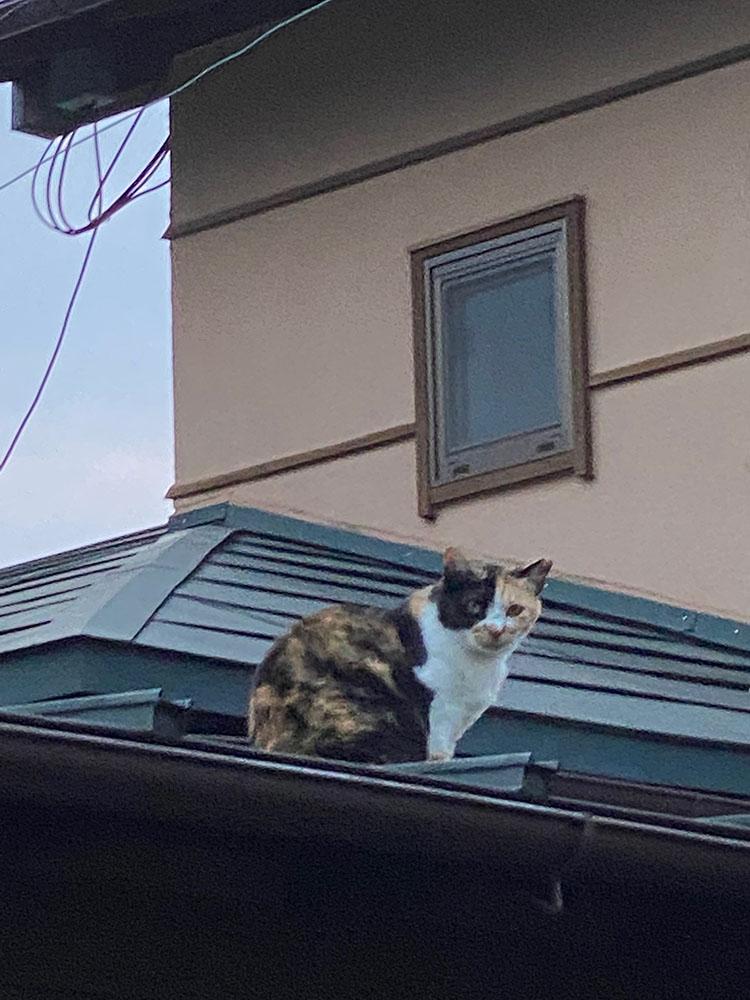 のあ屋根の上:05