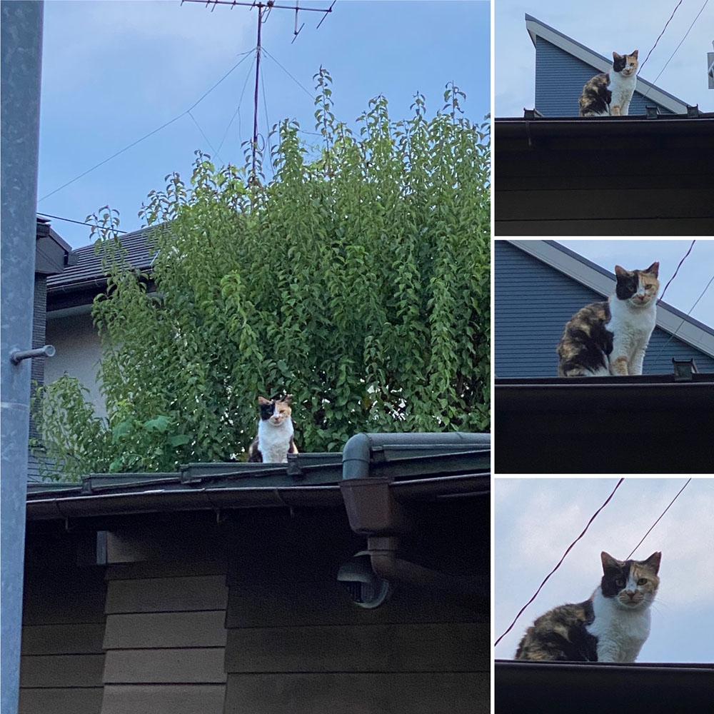 のあ屋根の上c:01