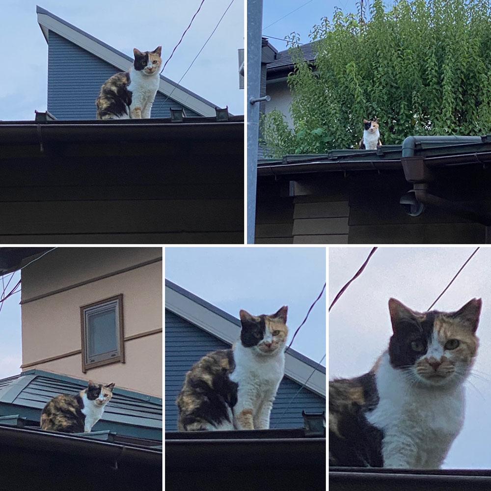 のあ屋根の上c:02