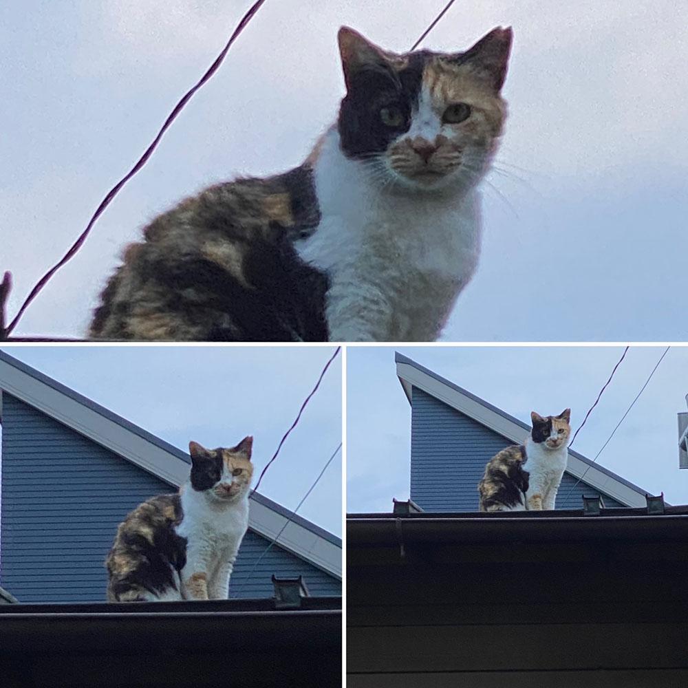 のあ屋根の上c:03