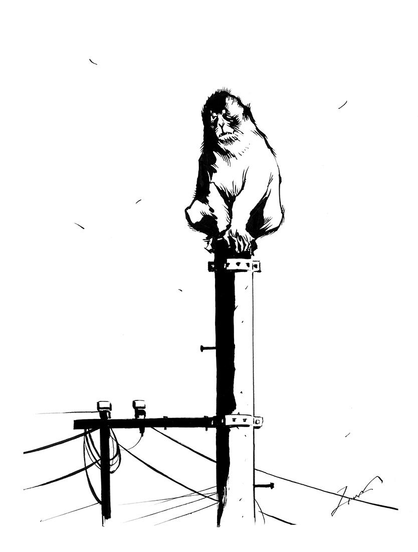 街に猿がいる違和感。