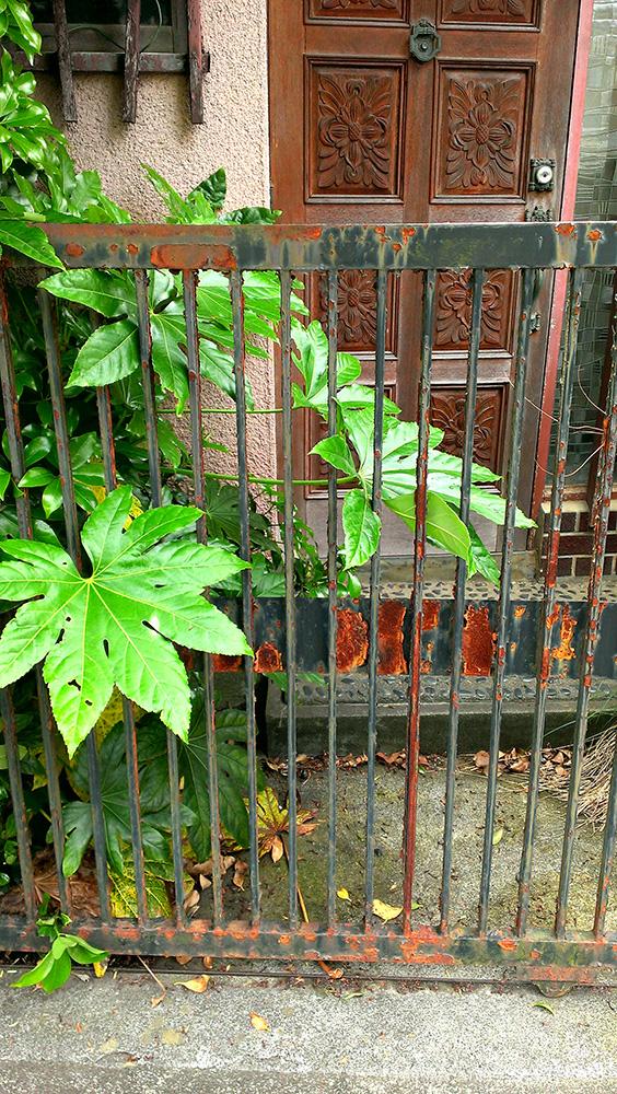 猫の墓玄関